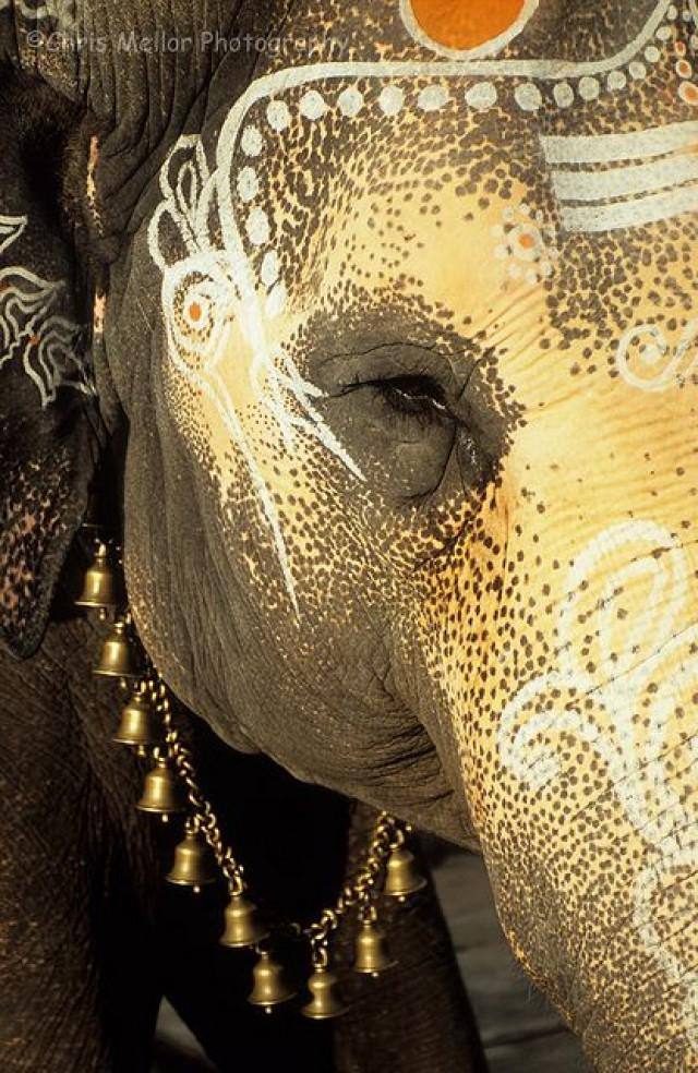 Popular Indian Elephant PicturesBuy Cheap Indian Elephant
