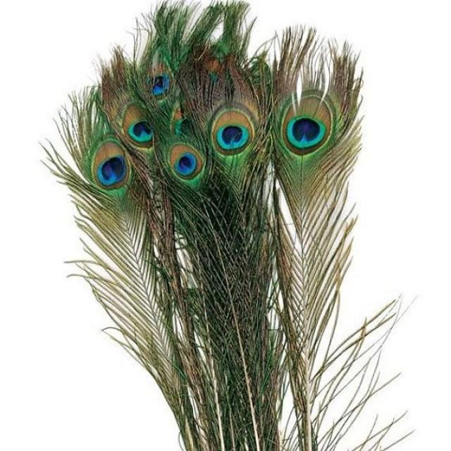 50 natural peacock feather for wedding decoration long for Peacock feather decorations home