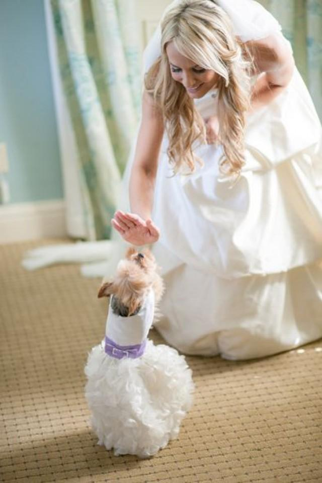 Pets Weddings Pets 2266296 Weddbook