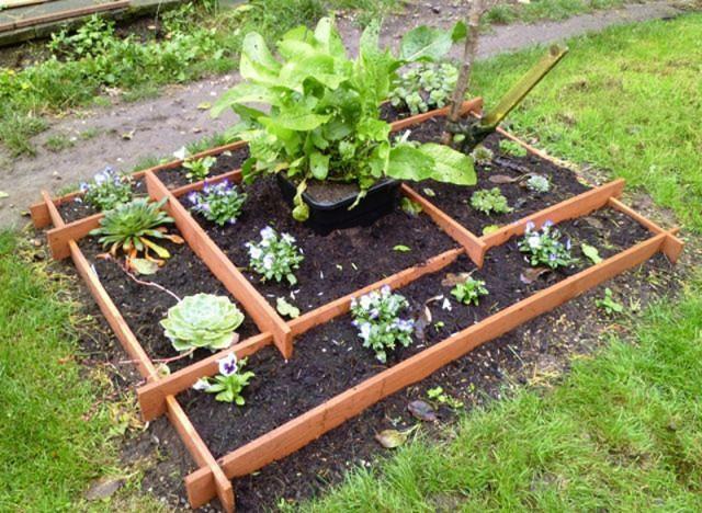 Plant food slot