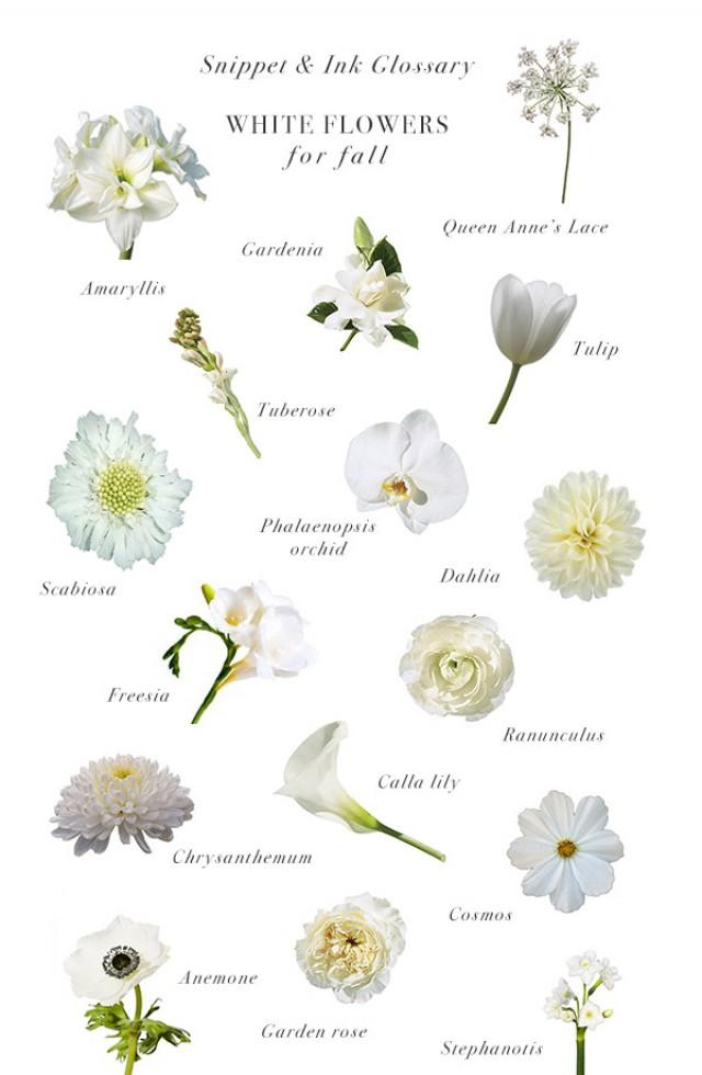 White Flowers For Fall Weddings :: Snippet & Ink Glossary - Snippet ...