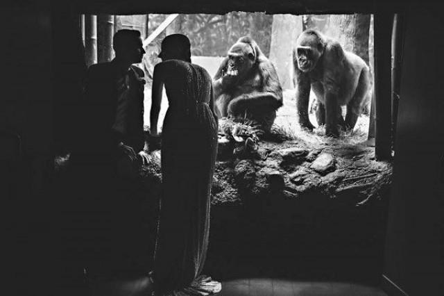 wedding photo - 2015 Favorite - Quirky Cool Bronx Zoo Wedding