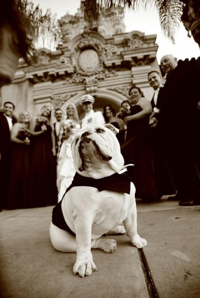 wedding photo - Phenomenal Photography - Wedding Party Pooches