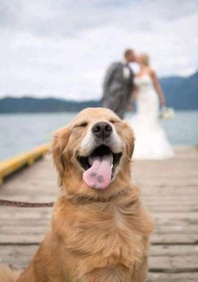 wedding photo - Don't You Just Hate It When That Perfect... - Barking Mad Dog Care