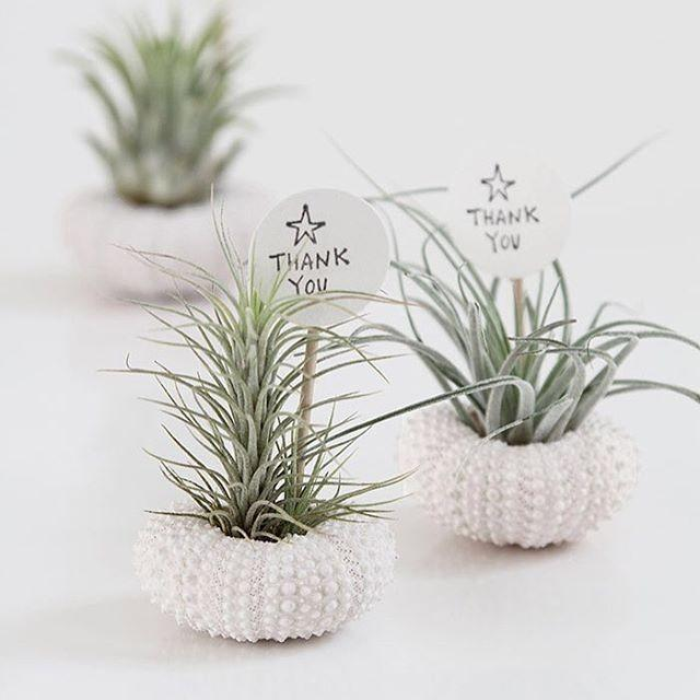 Modern wedding australia on instagram they 39 re called for Modern low maintenance plants