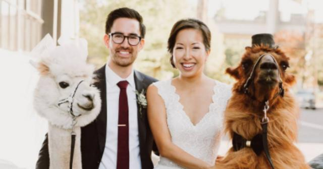 Now You Can Actually Hire Dapper Llamas To Attend Your Wedding