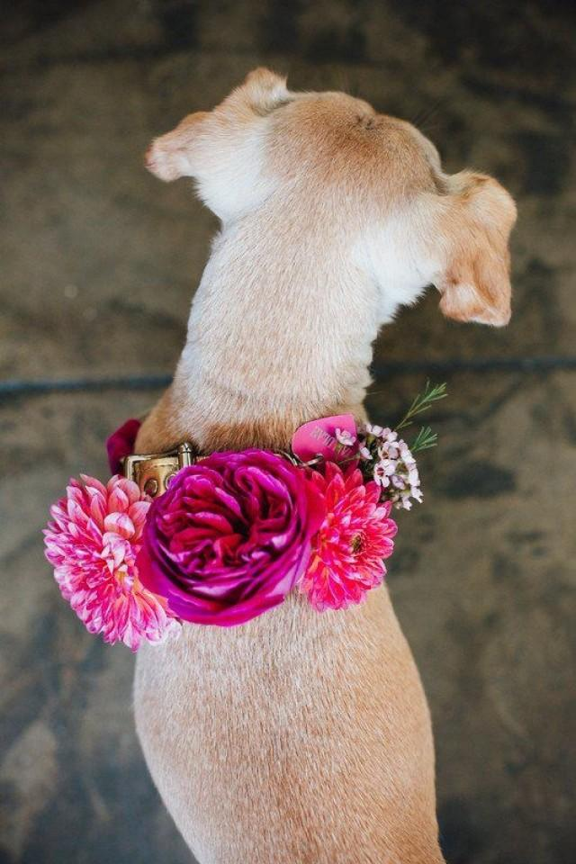 Wedding Dog Idea - Dog With Pink, Floral Collar {Winston & Main}