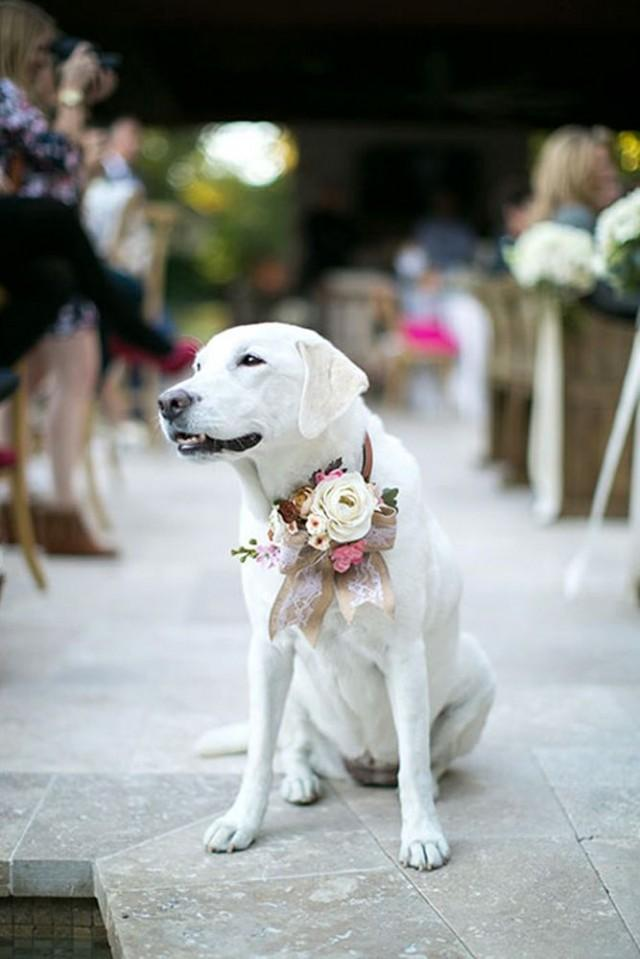 30 Gorgeous Photo Ideas Of Wedding Pets For Your Album