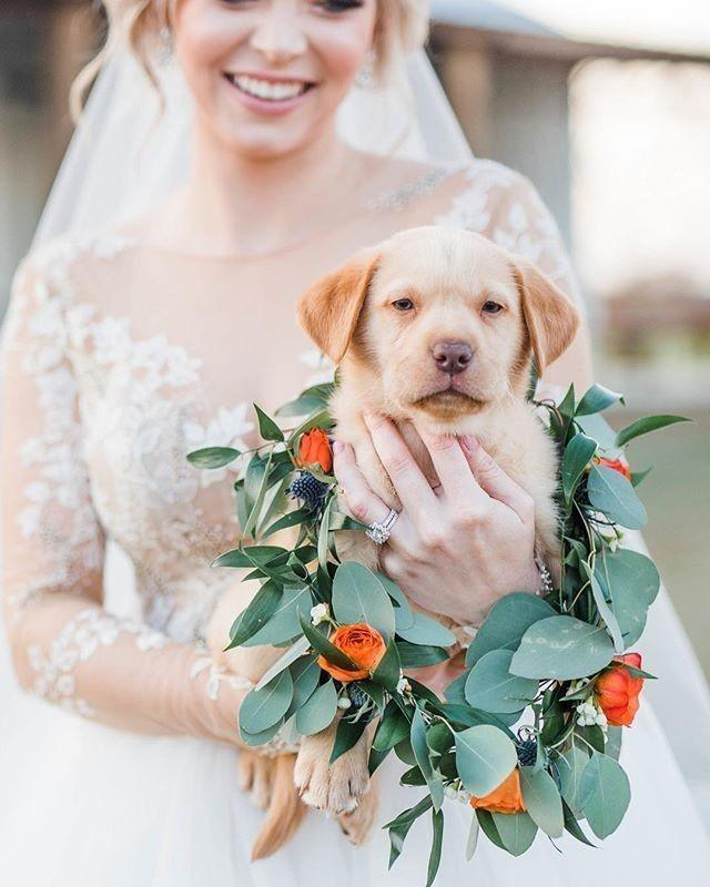 This Dreamy @blushbyhayleypaige And Her Adorable Pup-quet Is Melting Our Hearts For Our #MondayMood!!