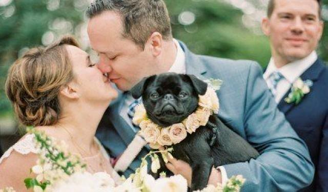 Cute Wedding Pet Idea - Dog With Flower Collar {Shine Events}