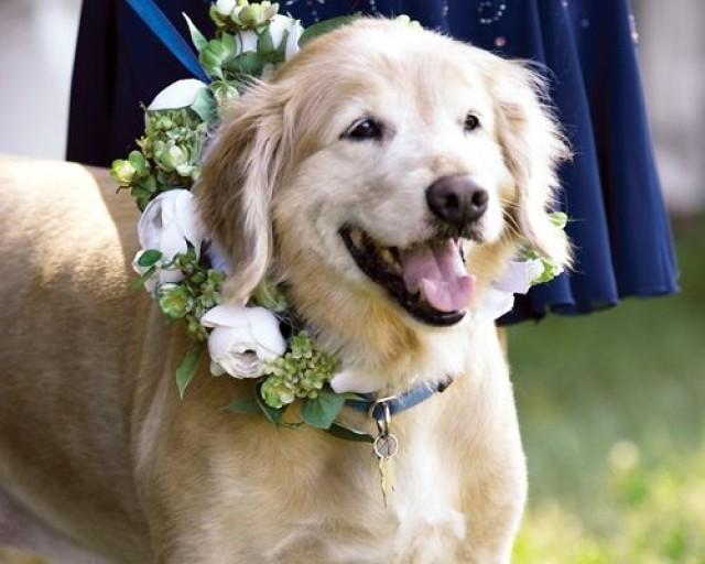 Is Your Pet Attending Your Wedding Have You Ever Been To A Wedding
