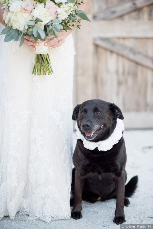 Black Lab   Wedding Pet Attire - Include Your Pets In Your Wedding {Emotive Photo}
