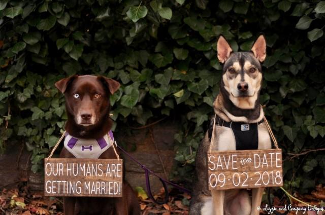 wedding photo - Our Humans are Getting Married, Pet Save the Date Sign, Dog Photo Prop Sign, Pet Wedding Sign, Engagement Photos Sign, Rustic Wedding Signs