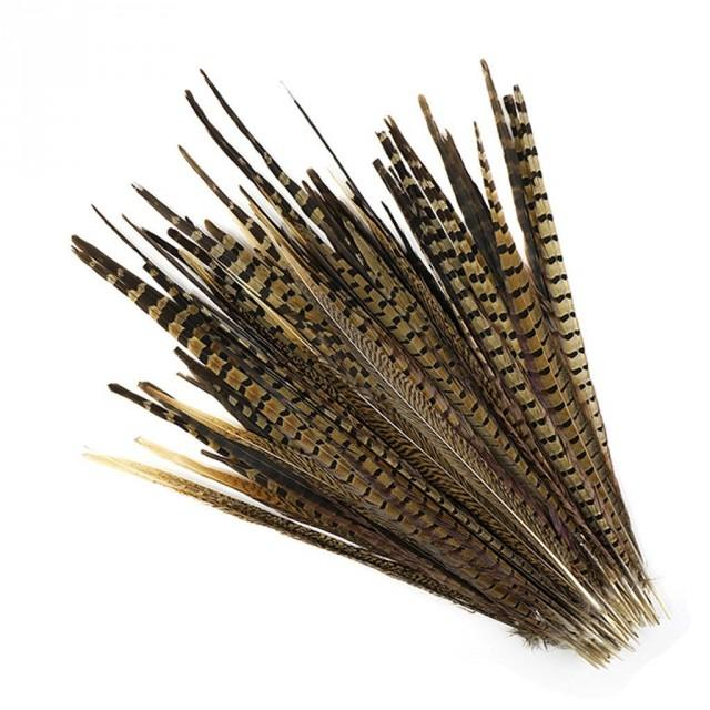 """10 Pcs ENGLISH RINGNECK Natural Pheasant Feathers 8-10"""" (Great for Craft Hat Costume Halloween Design)"""