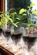 How to Make Handmade Bottle Planter - DIY & Crafts - Handimania