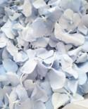 Freeze Hydrangea Petal, Natural Dusty Blue REAL Flower petal