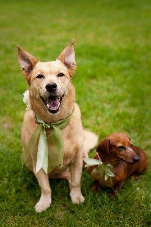 زفاف - Puppy LOVE