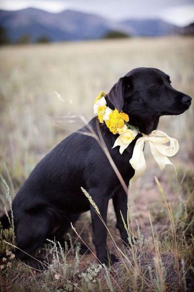 Wedding - Puppy LOVE