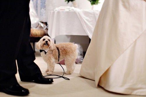 Свадьба - Puppy LOVE