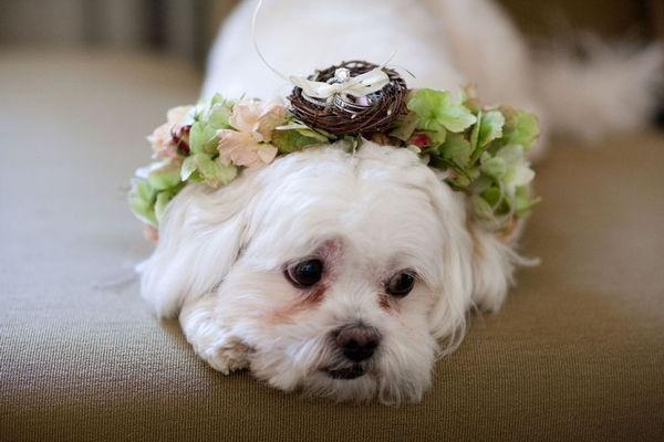 Hochzeit - Puppy LOVE