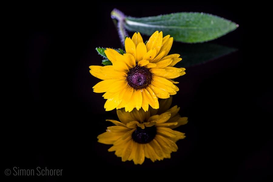 Hochzeit - reflection of a Yellow flower