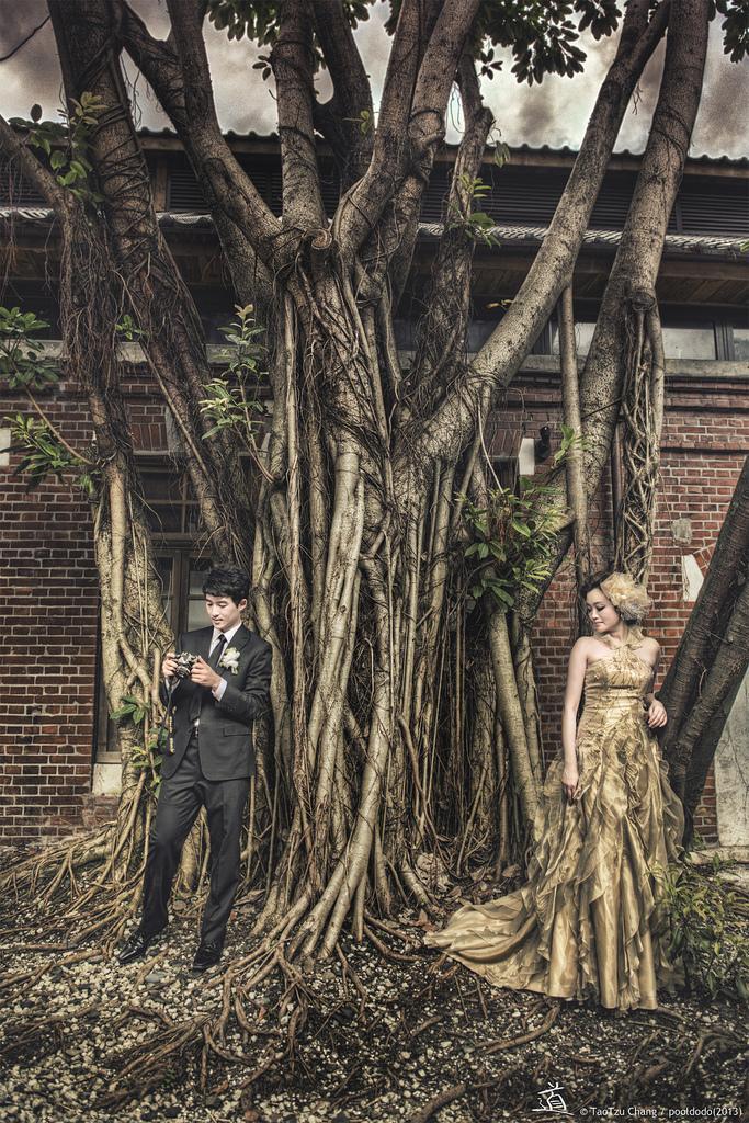 Wedding - [wedding] with old tree