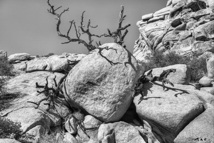 Mariage - [BW] rock
