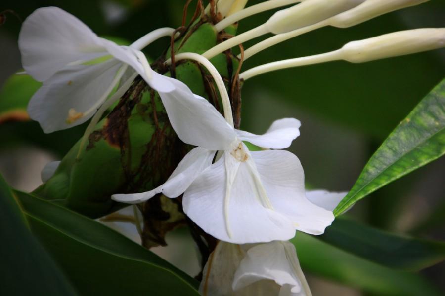 Wedding - flower