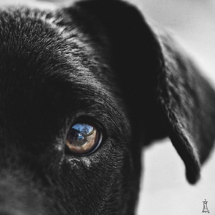 Hochzeit - [dog] in your eye