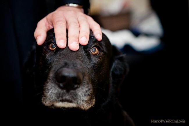 Wedding - Pets Of Honor