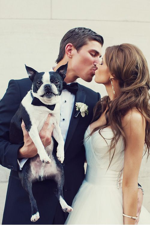 Wedding - Pets In The Wedding - Man's Best Friend