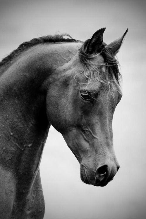 Boda - [ Classy Shades Of Grey ]