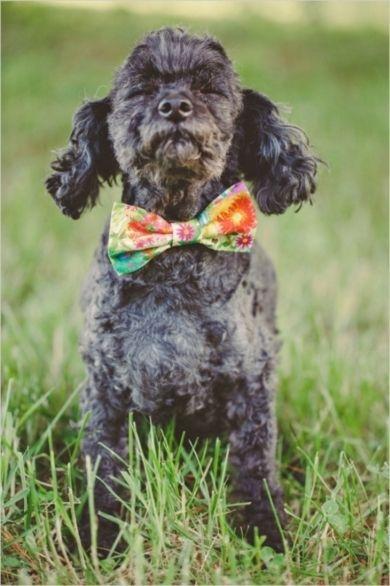 زفاف - Precious Puppies