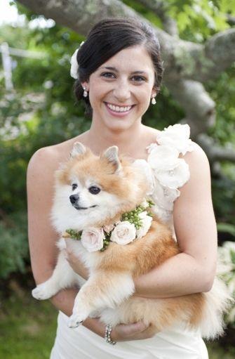Свадьба - Precious Puppies