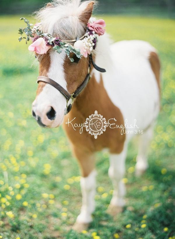 Свадьба - Мини Лошадь Для Свадьбы