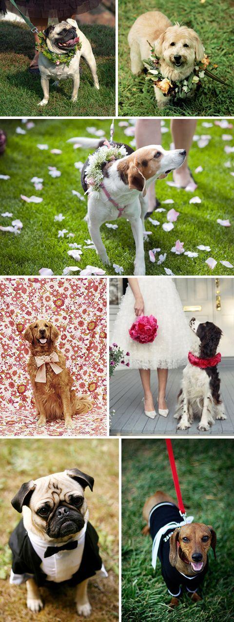 Свадьба - Различные Опции Для Вашей Собаки