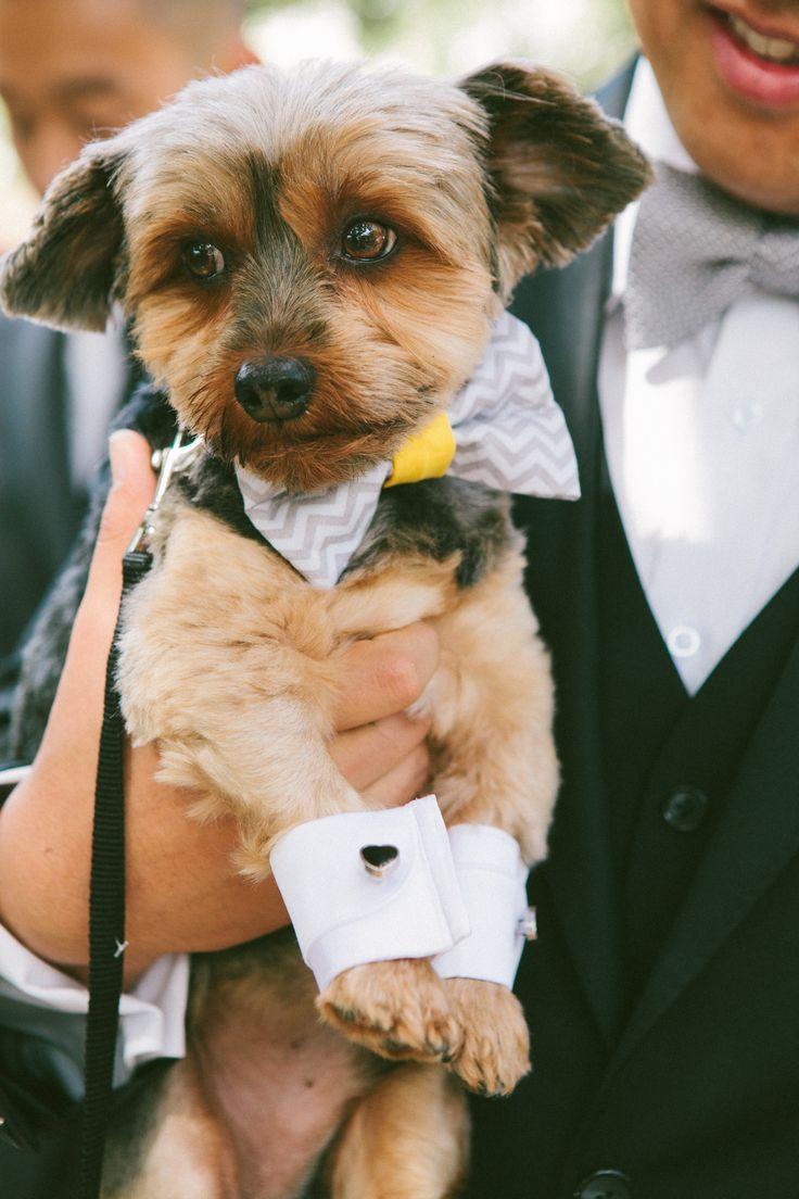 Свадьба - Щенок запонки #weddingpet
