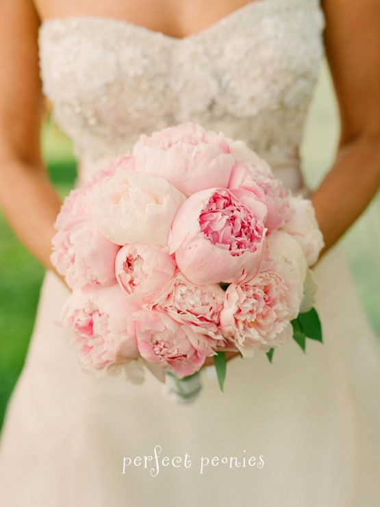 Soft Pink Peonies So