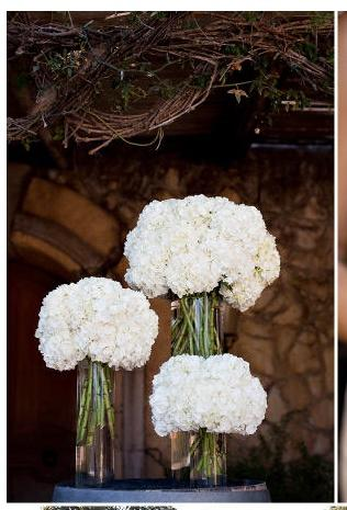 Wedding - Hydrangeas.