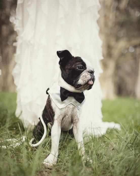 Свадьба - Черное И Белое Свадебное Щенка...