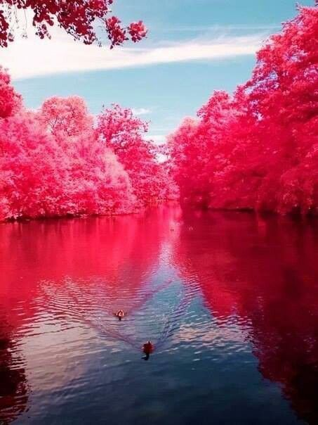 زفاف - In the middle of the sea surrounded by pink trees