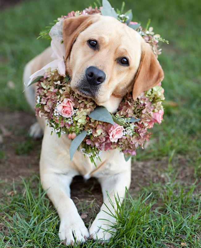 Ein Blumenkranz Für Ihre Hochzeit Hund
