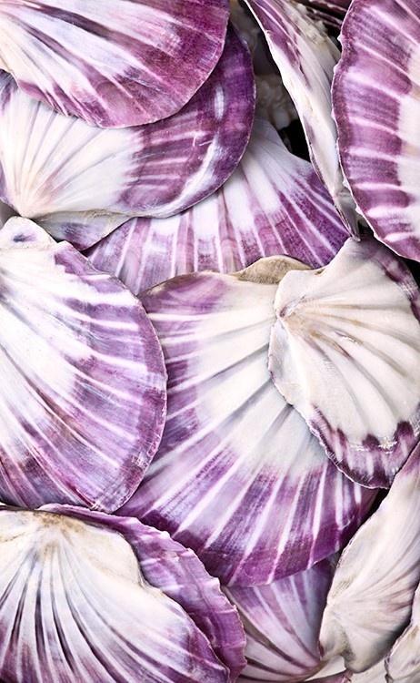 Свадьба - Фиолетовый Моллюски