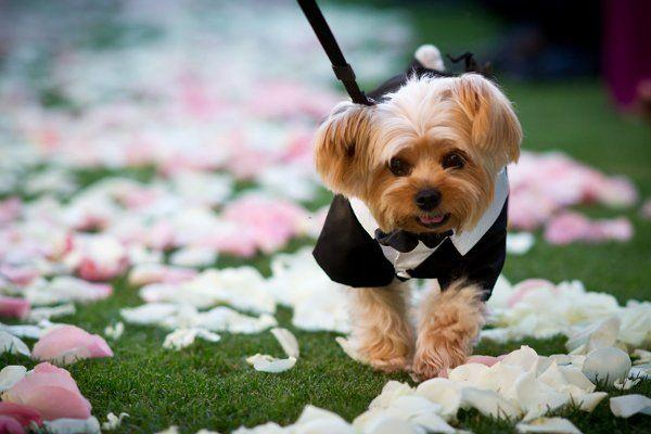 Pets - Wedding Animals #2052237 - Weddbook