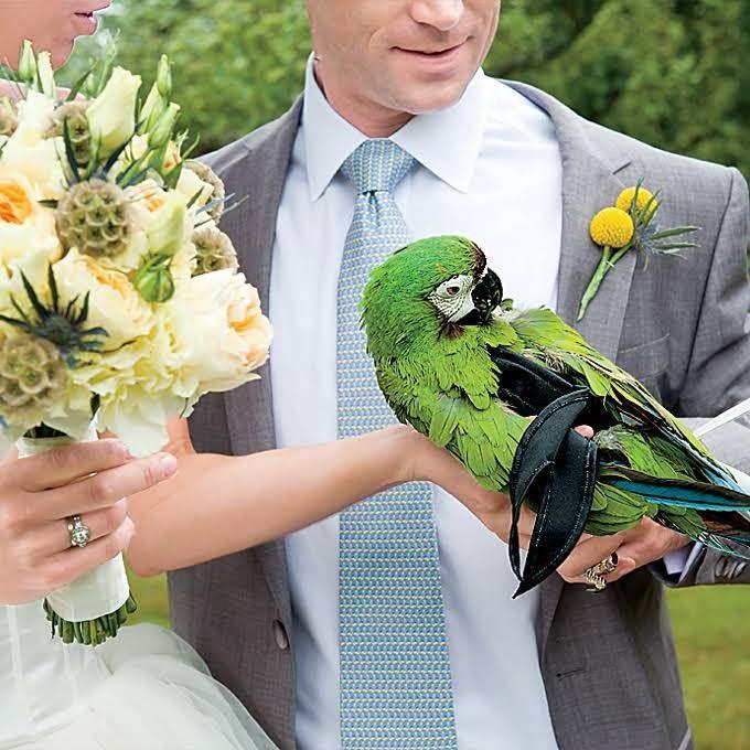 زفاف - كيفية تضمين الحيوانات الأليفة في حفل الزفاف الخاص بك الحيوانات الزفاف