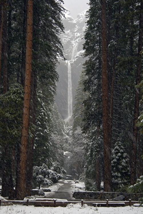 Wedding - Yosemite Falls, Ca