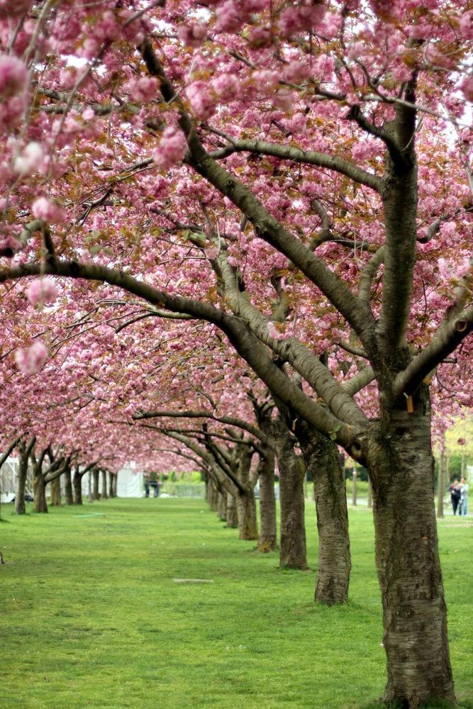 Boda - Abril en Primavera 'La Bella Durmiente' Pascua Secret Garden Wedding