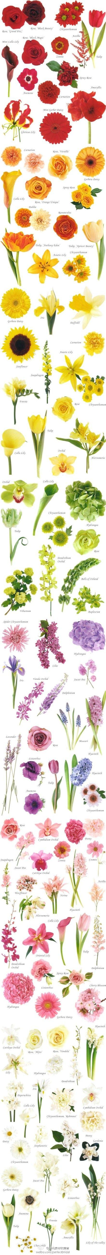 About Flower Chart Flower Colors And Wedding Flowers Asian Chinese