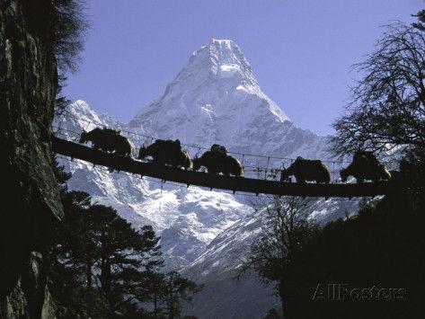 Свадьба - Мост На Ама-Даблам, Непал