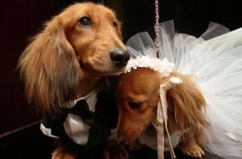 """Свадьба - """"Лапу""""nuptial"""